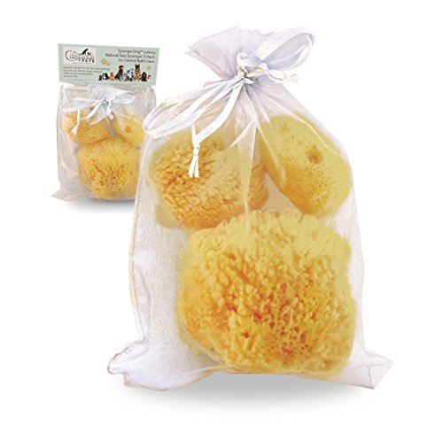 Natural Sea Sponges for Dogs - Luxury Canine Bath Care, for Pet Grooming & Pampering: Gentle & Hypoallergenic by Constantia Pets