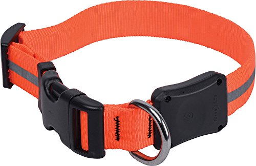 Nite Ize Dawg LED Collar product image