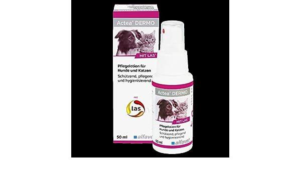 alfavet Actea Dermo Cuidado Loción 50 ml para perros y gatos: Amazon.es: Productos para mascotas