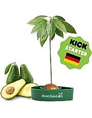 Avoseedo Het bijzondere tuincadeau – planten je eigen avocadoboom | kleine cadeaus voor mannen en vrouwen | de nieuwe kleine decoratie voor een mooier huis | de complete plantenset