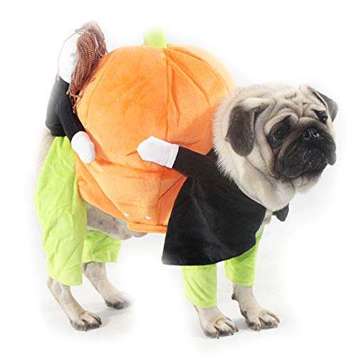 MeiAOBest Pet Clothes,Halloween Funny Dog Cat Holding Pumpkin Casual Costume Jacket for Christmas Halloween Party (XXL)