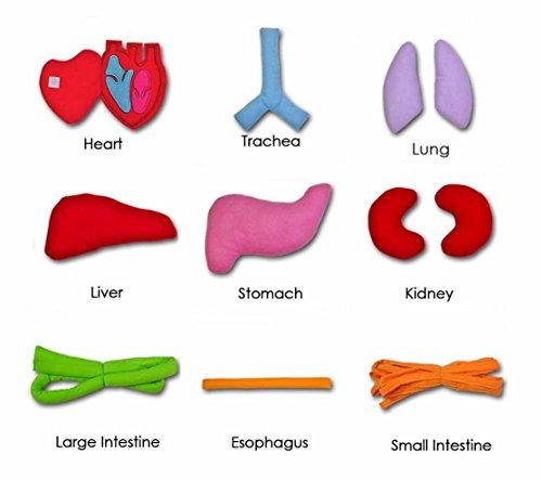 Review Anatomy Apron Human Body
