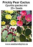 Fash Lady Prickly Pear Cactus Mix (Opuntia) 25+ Seeds