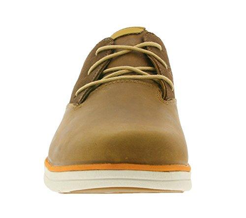 Plain Uomo Timberland Toe Scarpe Oxford Bradstreet Sensorflex Marrone qw5wpx6