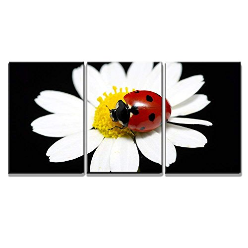 (wall26 - 3 Piece Canvas Wall Art - The Ladybug Sits on a Flower Petal - Modern Home Decor Stretched and Framed Ready to Hang - 16