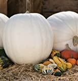 buy Polar Bear White Pumpkin (F1) 10 seeds now, new 2018-2017 bestseller, review and Photo, best price $3.60