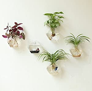 Fashionstorm Home Decor Wall Decorations Geometric Sixangle Glass Vase Wall Sticked Planters Flower Pots Water Planter Vase