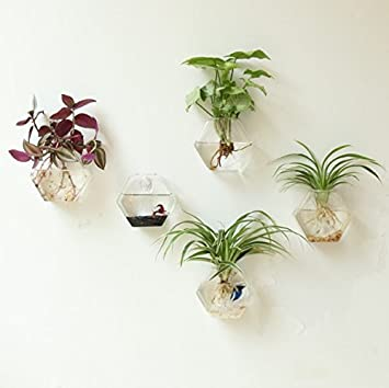 Fashionstorm Home Decor Wall Decorations Geometric Sixangle Glass Vase Wall Sticked Planters Flower Pots Water