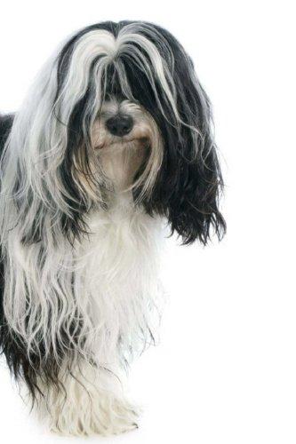 Tibetan Terrier: Artified Pets Journal/Notebook/Diary, 6