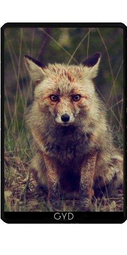 Hülle für Kindle Fire 7 pouces (2012 Version) - Tier Fuchs Wildtiere by WonderfulDreamPicture