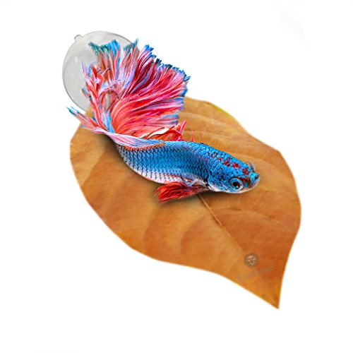 sungrow-betta-bed-large-comfortable-rest-area-improve-health-by-simulating-bettas-natural-habitat-na