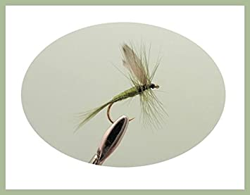 6 Pack Olive F Fly For Trout Fly Fishing Choice of Sizes F Flies