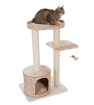 arbre a chat jacinthe d'eau