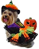 Prima Dog Witch Halloween Costume with Hat for Dogs (S for Dogs 6-9 lbs.)