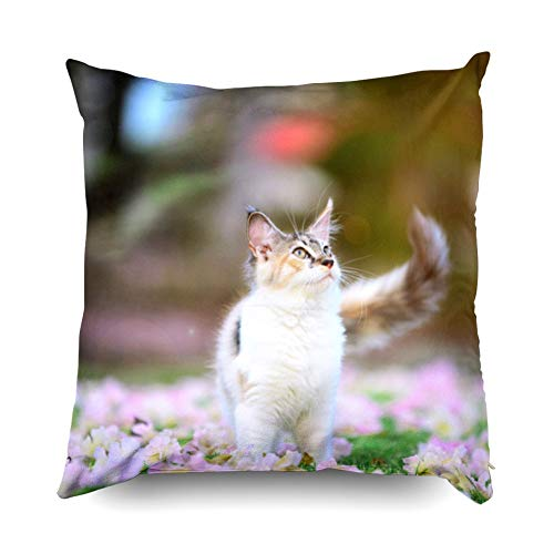 (Jacrane Easter Decorative Throw Pillowcase Cover 20X20 Inch Portrait Happy Color Cat Chilling in Pink White Flowers Garden Blurry Art Gift Soft Cuddle Square Pillow Case with Zippered)