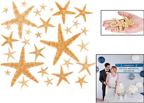 (Fun Express Real Starfish Decoration (30 Piece))