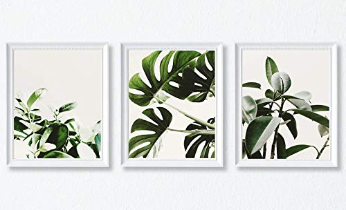 (Tropical Plant, Green Leaves, Modern Photography Poster Set, 3 Poster Collection, Wall Art Home Decor, Size 11x14 Inches (Tropical Plant 1 Art))