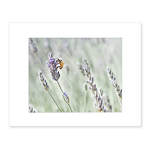 Lavender Wall Art Rustic Floral Decor Farmhouse Style Picture Of Honey Bee 8x10 Matted Photography PrintLavender For Bees