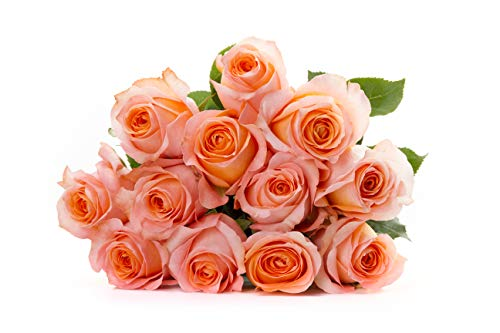 Martha Stewart Roses by BloomsyBox - One Dozen Peach Coral Reef Roses Selected by Martha and Hand-Tied, Long Vase Life