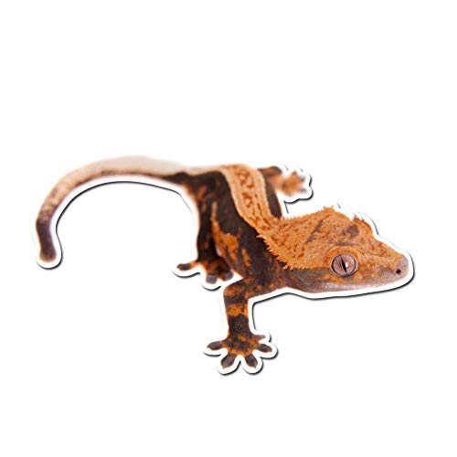 Dark Spark Decals New Caledonian Crested Gecko - 5 Inch Full Color Vinyl Decal for Indoor or Outdoor use, Cars, Laptops, Décor, Windows, and More