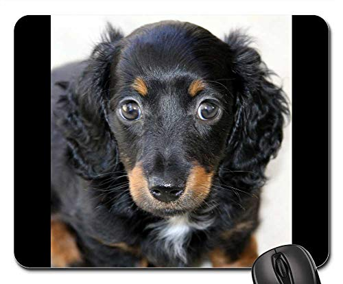 Mouse Pads - Dachshund Puppy Mini Long Hair Pet Canine Pup