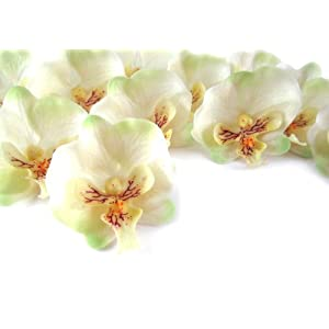 """(100) Small Ivory Phalaenopsis Orchid Silk Flower Heads - 2"""" - Artificial Flowers Heads Fabric Floral Supplies Wholesale Lot for Wedding Flowers Accessories Make Bridal Hair Clips Headbands Dress 44"""
