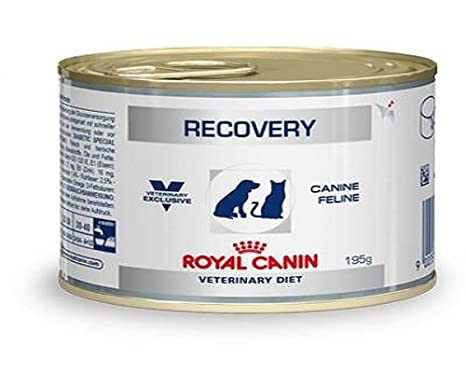 ROYAL CANIN C-11402 Diet Recovery - 195 gr: Amazon.es: Productos para mascotas