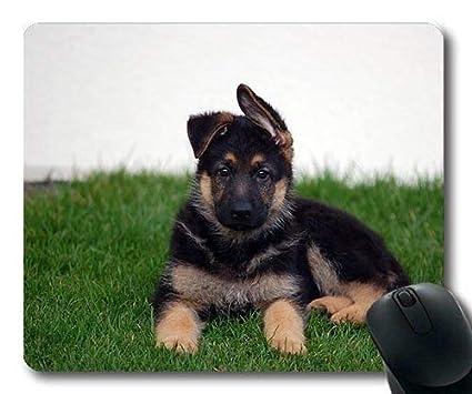 French German Shepherd