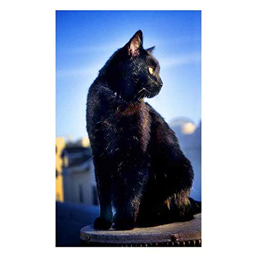 DIY 5D Diamond Painting by Number Kit, Full Drill Black Cat Rhinestone Embroidery Cross Stitch Supply Arts Craft Canvas Wall Decor (Stitch Cat Black Cross)