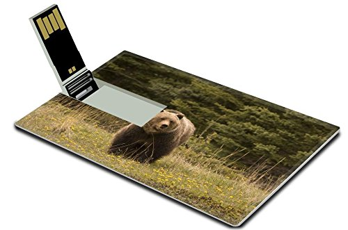 luxlady-32gb-usb-flash-drive-20-memory-stick-credit-card-size-image-id-2249826-large-grizzly-shot-in