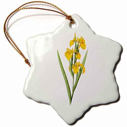 3dRose Dooni Designs Redoute Fruits and Flowers - Redoute Vintage Watercolor Floral Yellow Flag Iris Iris Pseudacorus - 3 inch Snowflake Porcelain Ornament (orn_106845_1)