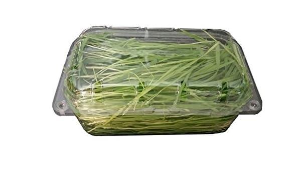 500g Hierba de trigo Wheat Grass fresco de semillas ecologicas para ...