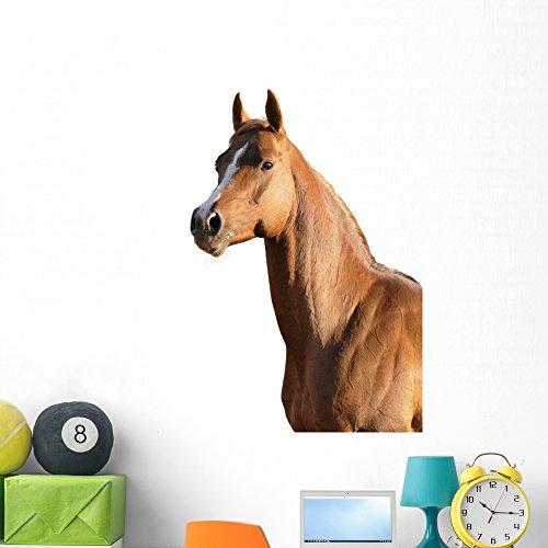 Wallmonkeys Brown Arabian Horse Wall Decal Peel and Stick Graphic WM22371 (48 in H x 33 in W) by Wallmonkeys