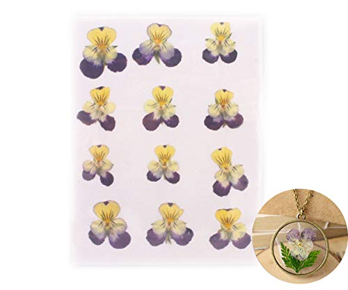 12pcs Purple Yellow Natural Pressed Dried Pansy Flower Dry Plants Epoxy UV Resin Pendant Necklace Nail Art Jewelry Making Scrapbooking DIY - Pansy Flower Beads