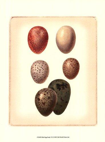 Bird Egg Study VI by Vision Studio - 9.5x13 Inches - Art Print - Study Egg Bird Studio Vision