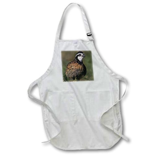Rolfs Pocket - 3dRose apr_84561_4 Northern Bobwhite, Lake Corpus Christi, Texas - Rolf Nussbaumer - Full Length Apron with Pockets, 22 by 30-Inch, Black
