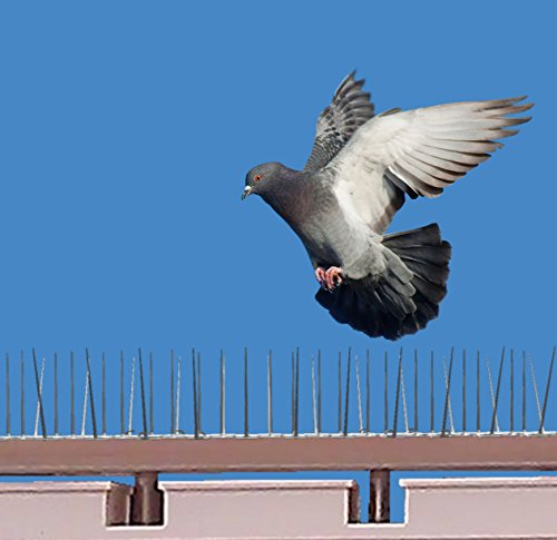 Spikezone – Bird Control Spikes, Bird Spikes, Pigeon Spikes, Ploycarbote Spikes (Cover 22 Running Feet, Set of 20 Pcs)