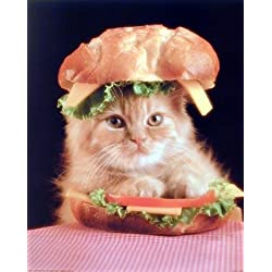 Cute Cat in a Sandwich Kitten Animal Wall Decor Art Print Poster (16x20)