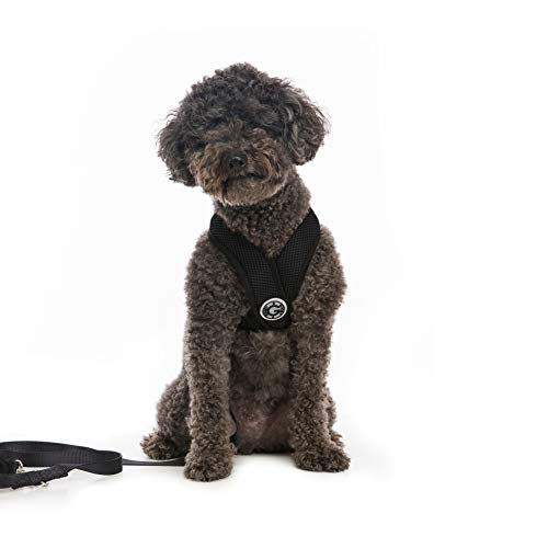 Gooby - Comfort X Head-in Harness, Choke Free Small Dog Harness with Micro Suede Trimming and Patented X Frame, Black, Large