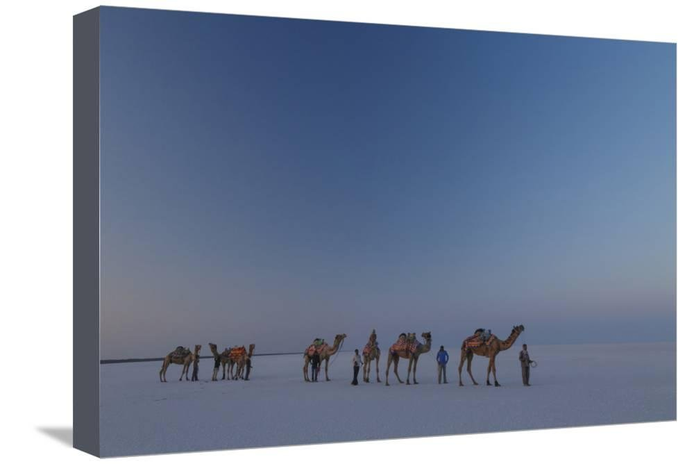ArtEdge Camel Train, India Stretched Canvas Print
