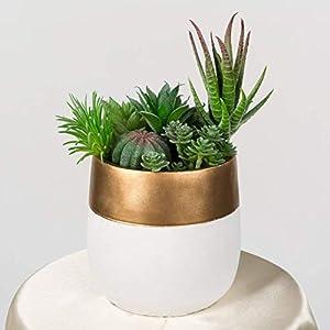 TIMEYARD 12 Pack Artificial Succulents, Faux Succulent Plants Fake Succulents Unpotted in Different Kinds, Echeveria Agave Arrangement Realistic Home décor 6