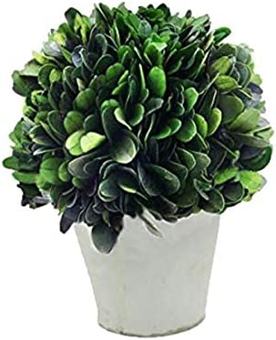 """Simple Care COCOMIA Preserved Boxwood Tree with Small Pot 2.4/""""Wx2.4/""""Dx6.3/""""H Natural Indoor Greenery"""