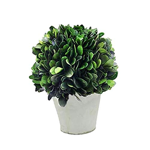 COCOMIA Preserved Boxwood Ball with Small Pot - Natural Indoor Greenery, Simple Care, 4