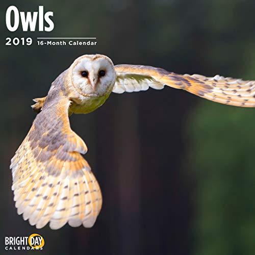 Owls 2019 16 Month Wall Calendar 12 x 12 -