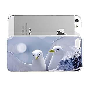 iPhone 5&5S cover case Animals Close Up Birds