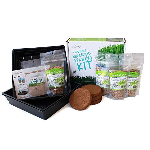 Organic Wheatgrass Growing Starter Kit - Grow & Juice Wheat Grass - Includes Non-GMO, Organic Wheatgrass Seeds - for Healthy Wheatgrass Shots, Home, Garden, and Cat Grass (Best Wheatgrass Seeds For Juicing)