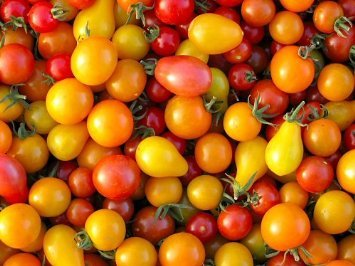 *Seeds and Things Rainbow Blend Cherry Tomato - 25+ Seeds