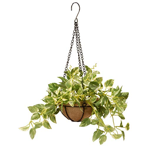 National Tree Pothos Plant Hanging Basket 9 Inch Green