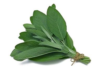 50+ Organic Broadleaf Sage Seeds ~Herb Garden Perennial Culinary Spice
