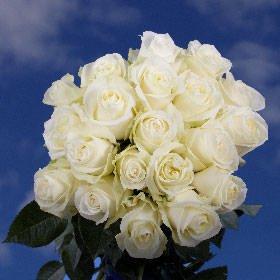 GlobalRose 50 White Roses - Long Stem Flowers - For Birthdays, Weddings or Anniversary